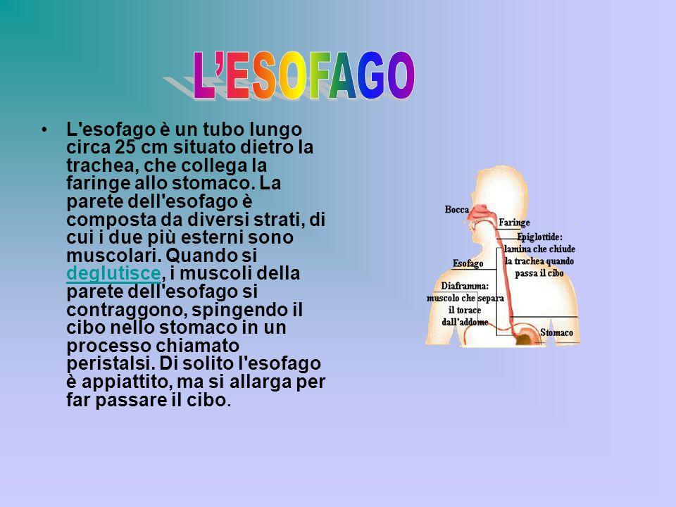 L'ESOFAGO