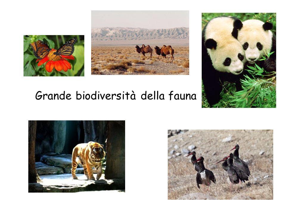 Grande biodiversità della fauna