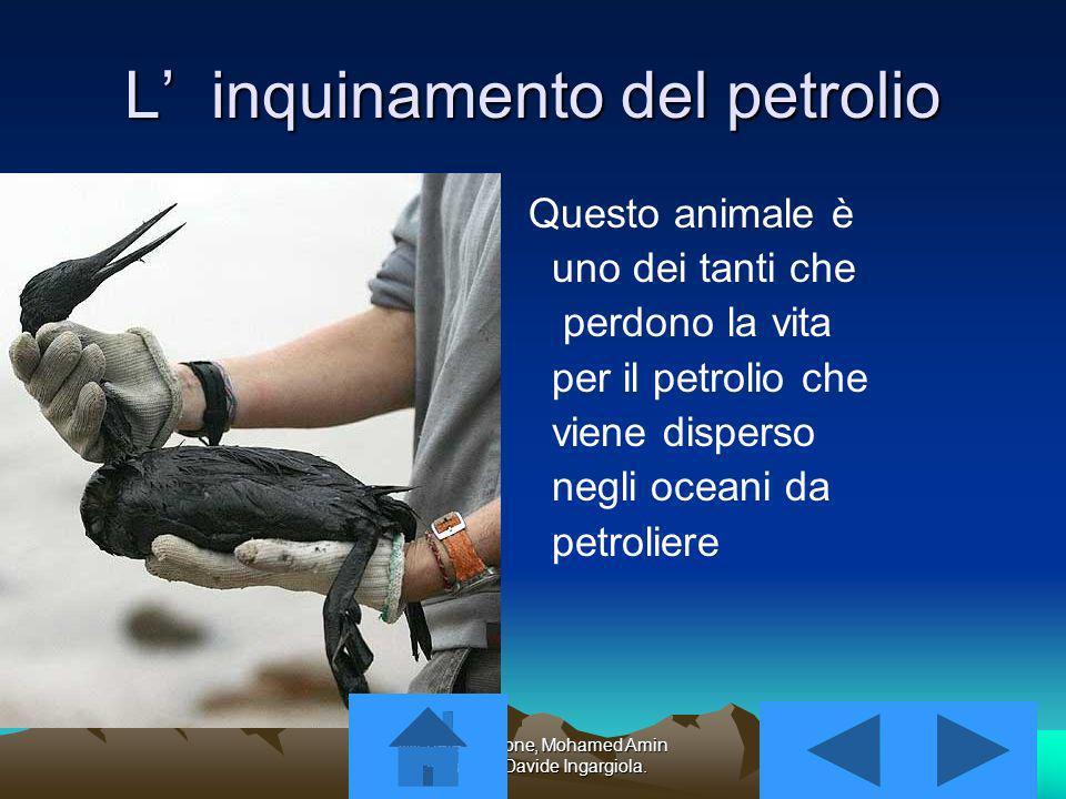 L' inquinamento del petrolio