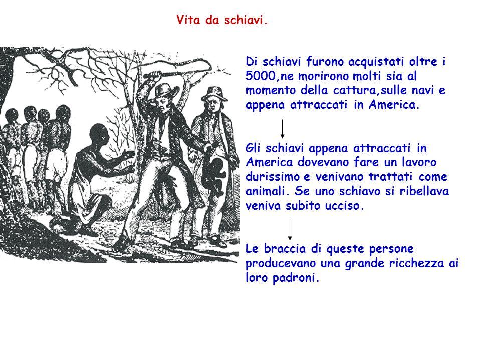 Vita da schiavi. Di schiavi furono acquistati oltre i 5000,ne morirono molti sia al momento della cattura,sulle navi e appena attraccati in America.