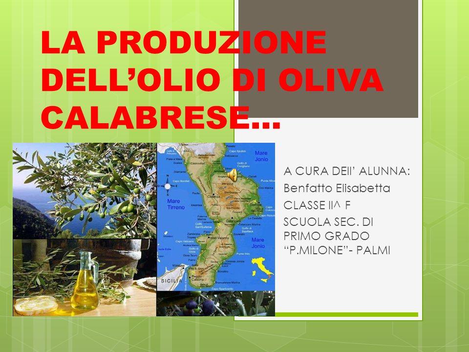 LA PRODUZIONE DELL'OLIO DI OLIVA CALABRESE…