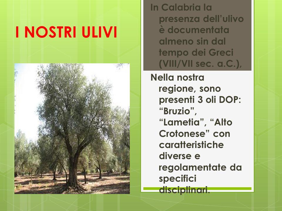 In Calabria la presenza dell'ulivo è documentata almeno sin dal tempo dei Greci (VIII/VII sec. a.C.),