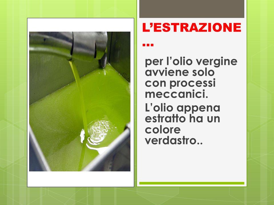 L'ESTRAZIONE… per l'olio vergine avviene solo con processi meccanici.