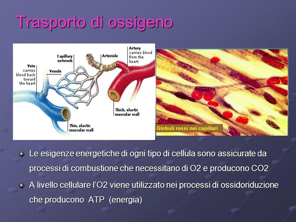 Trasporto di ossigeno
