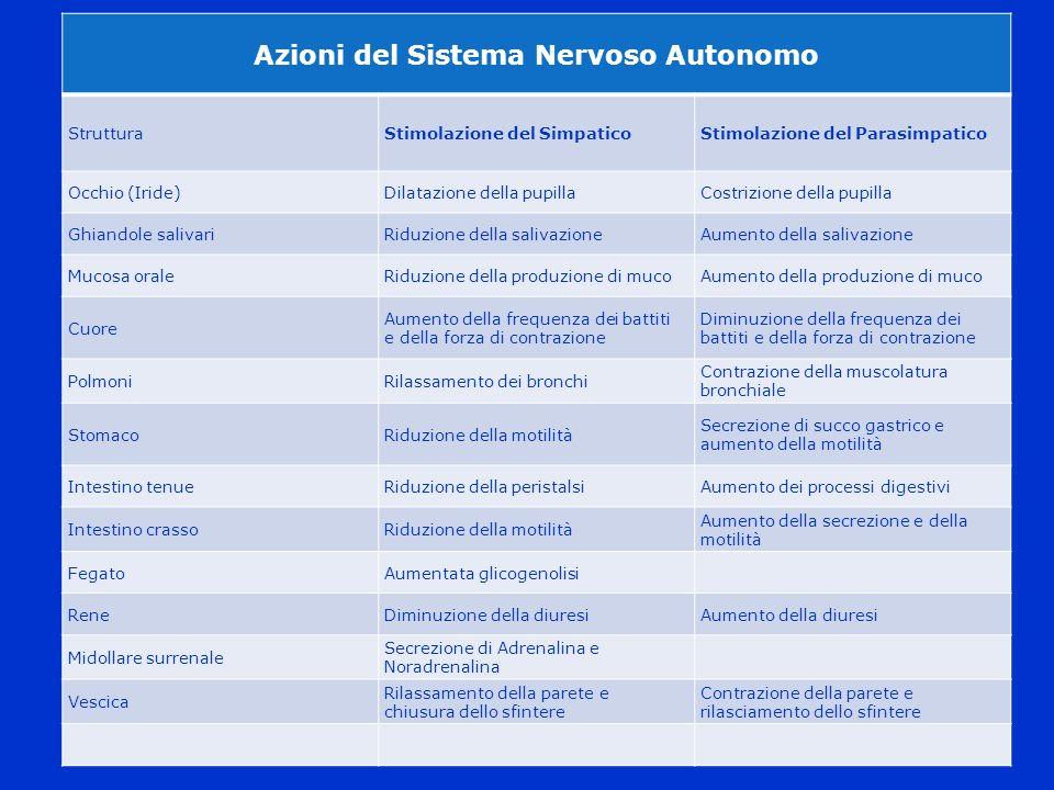 Azioni del Sistema Nervoso Autonomo
