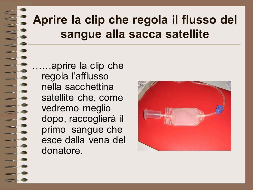 Aprire la clip che regola il flusso del sangue alla sacca satellite