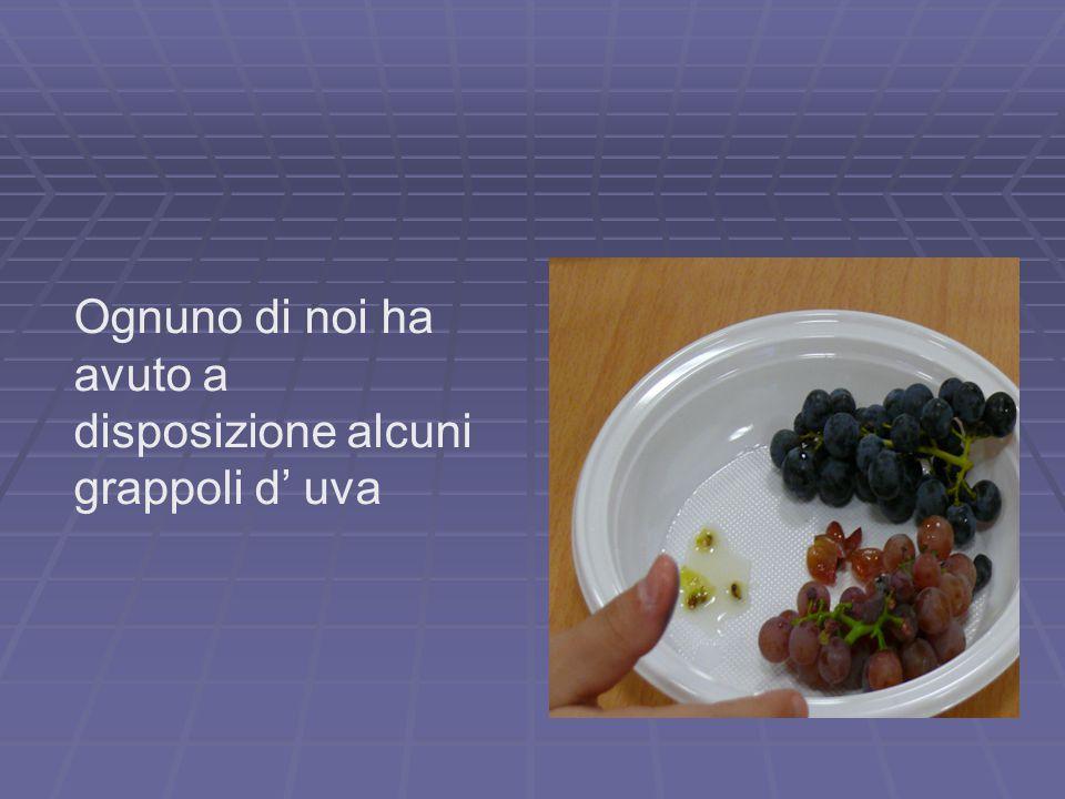 Ognuno di noi ha avuto a disposizione alcuni grappoli d' uva