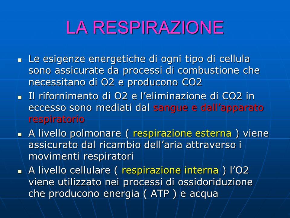 LA RESPIRAZIONE Le esigenze energetiche di ogni tipo di cellula sono assicurate da processi di combustione che necessitano di O2 e producono CO2.