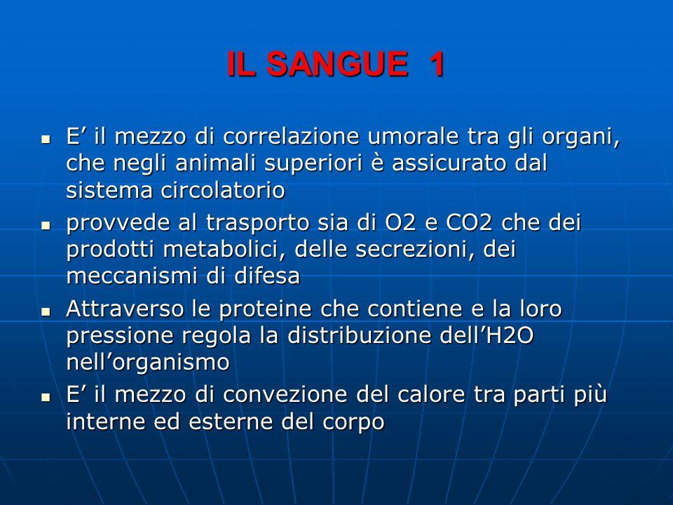 IL SANGUE 1 E' il mezzo di correlazione umorale tra gli organi, che negli animali superiori è assicurato dal sistema circolatorio.