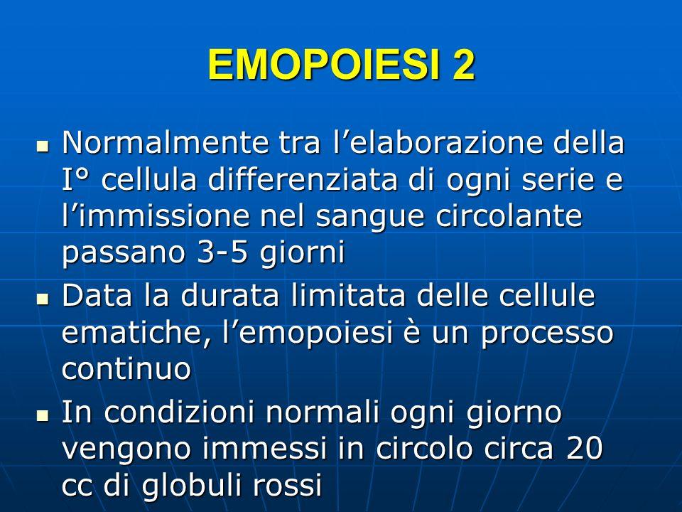 EMOPOIESI 2 Normalmente tra l'elaborazione della I° cellula differenziata di ogni serie e l'immissione nel sangue circolante passano 3-5 giorni.