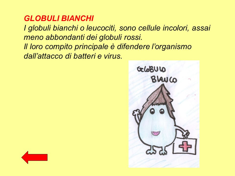GLOBULI BIANCHI I globuli bianchi o leucociti, sono cellule incolori, assai meno abbondanti dei globuli rossi.