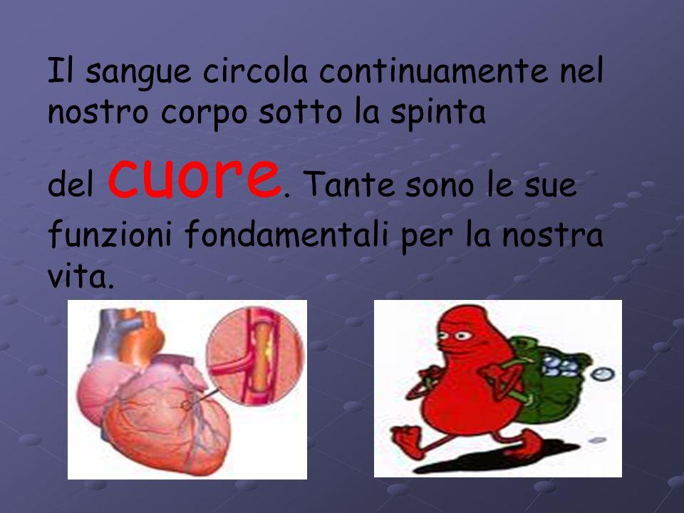 Il sangue circola continuamente nel nostro corpo sotto la spinta