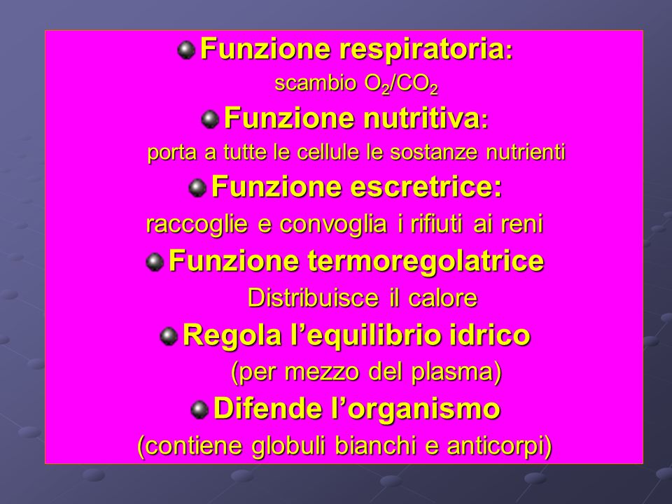 Funzione respiratoria: Funzione nutritiva: Funzione escretrice: