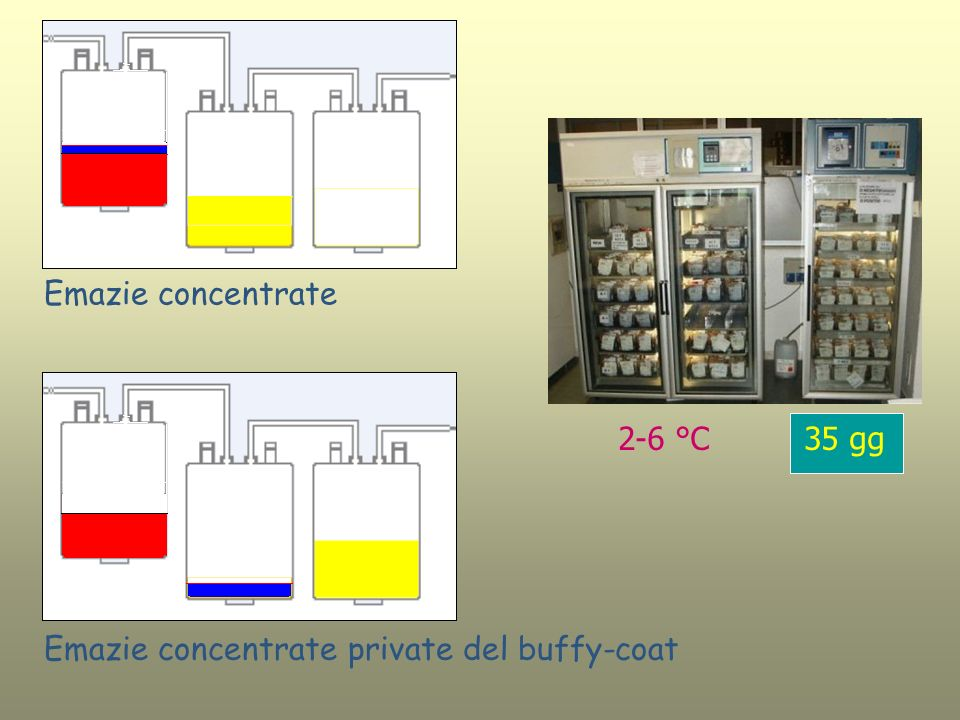Emazie concentrate 2-6 °C 35 gg Emazie concentrate private del buffy-coat
