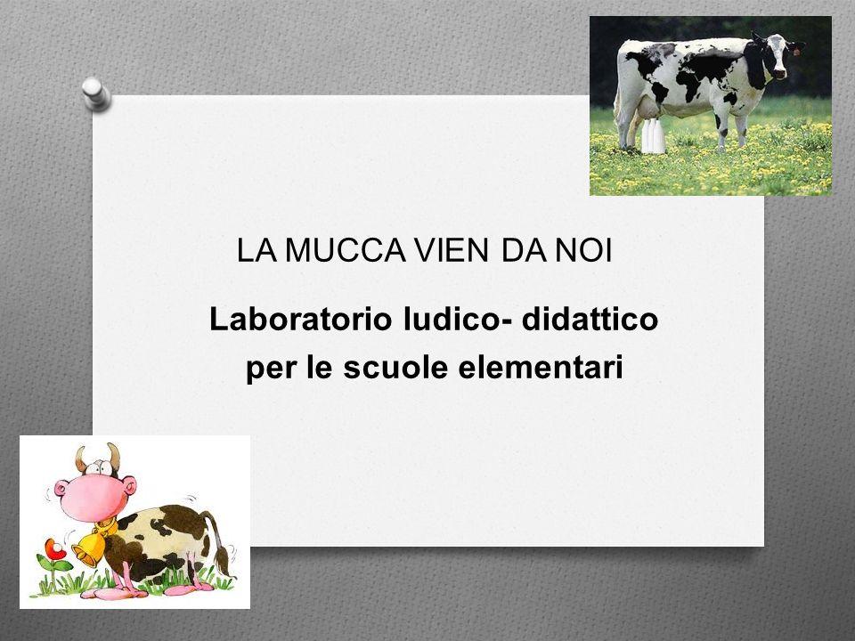 Laboratorio ludico- didattico per le scuole elementari