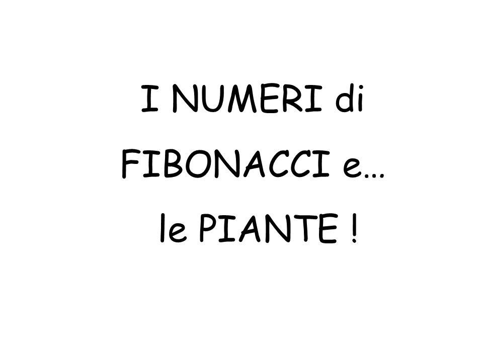 I NUMERI di FIBONACCI e… le PIANTE !