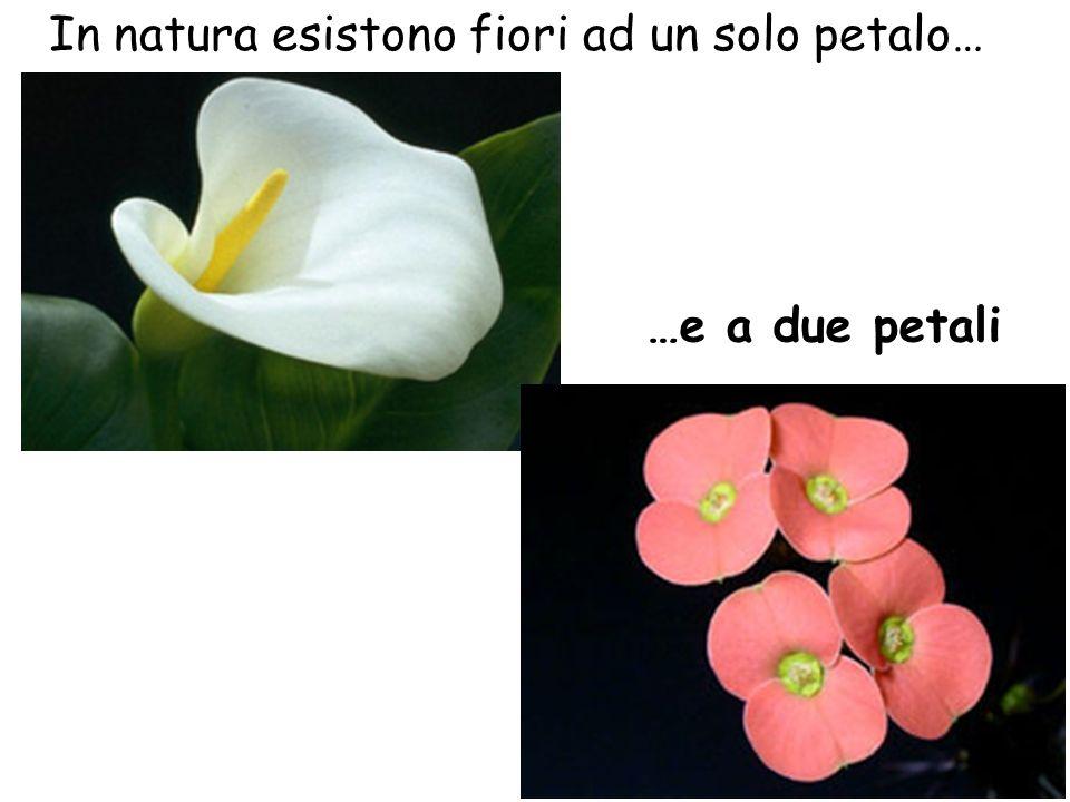 In natura esistono fiori ad un solo petalo…
