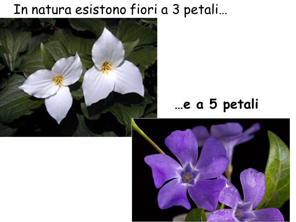 In natura esistono fiori a 3 petali…
