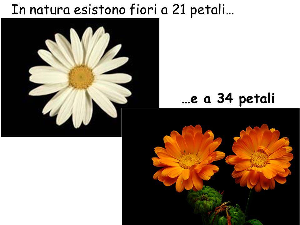 In natura esistono fiori a 21 petali…