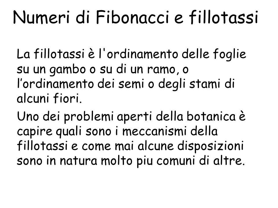 Numeri di Fibonacci e fillotassi