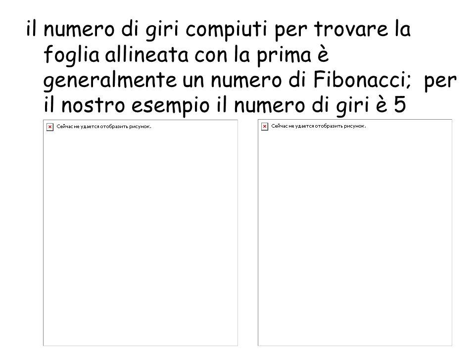 il numero di giri compiuti per trovare la foglia allineata con la prima è generalmente un numero di Fibonacci; per il nostro esempio il numero di giri è 5