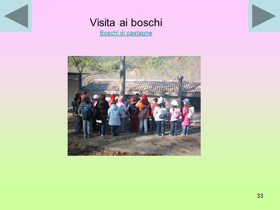 Visita ai boschi Boschi di castagne