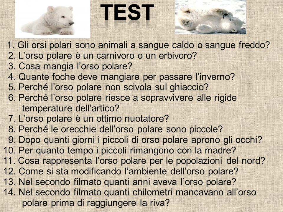 TEST 2. L'orso polare è un carnivoro o un erbivoro