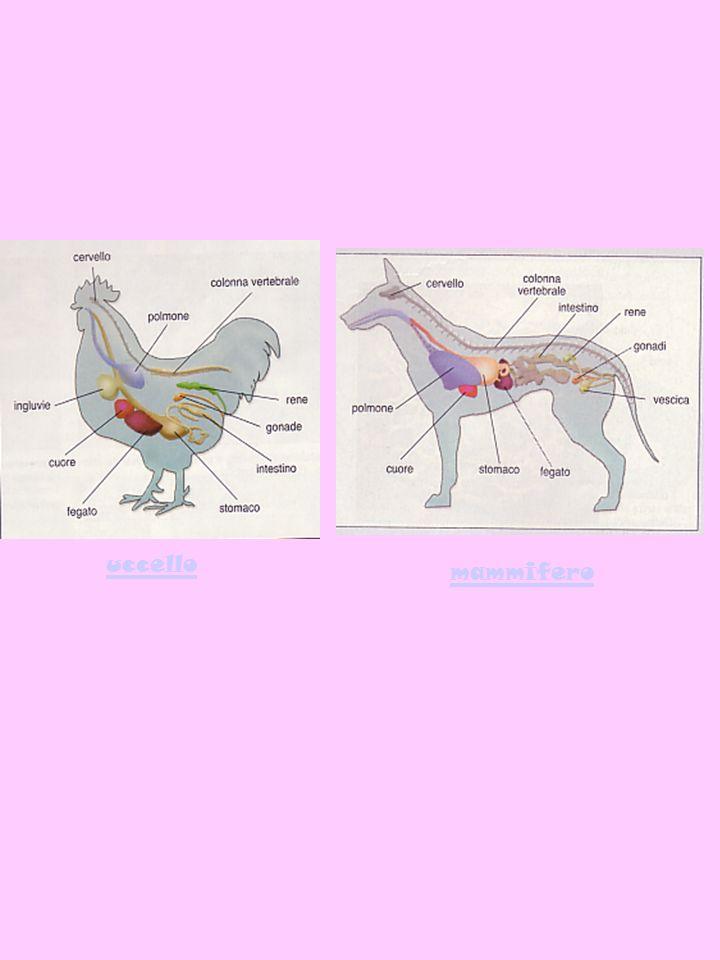 mammifero uccello