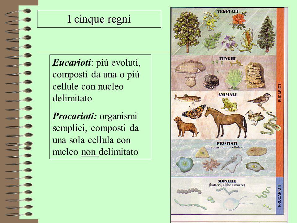 I cinque regni Eucarioti: più evoluti, composti da una o più cellule con nucleo delimitato.