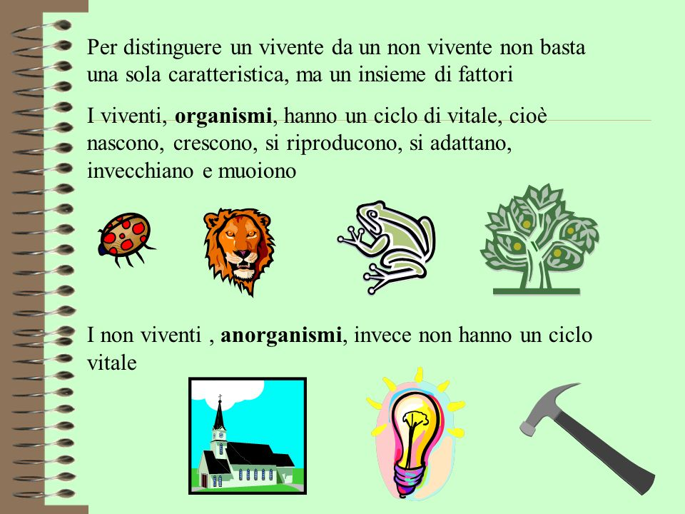 Esseri Viventi E Loro Classificazione Ppt Video Online