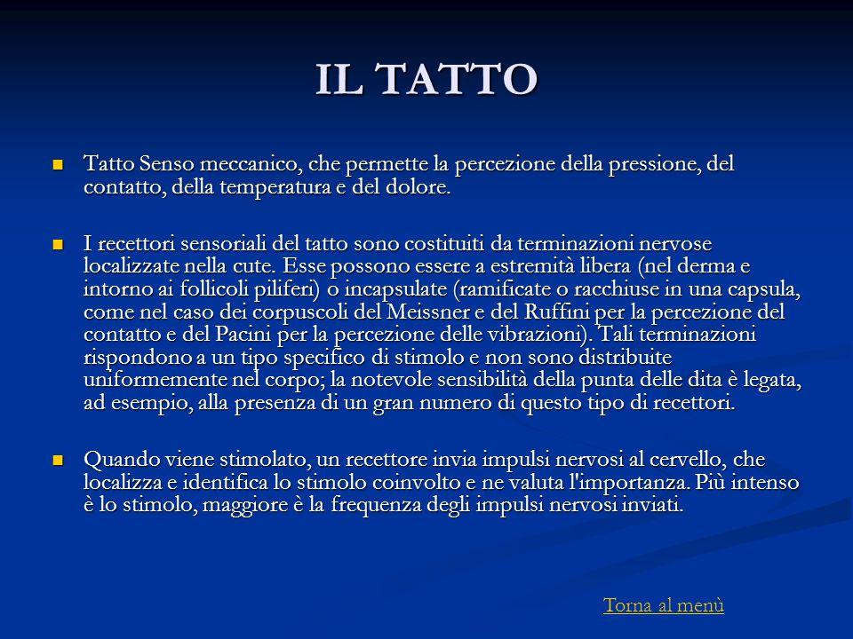IL TATTO Tatto Senso meccanico, che permette la percezione della pressione, del contatto, della temperatura e del dolore.