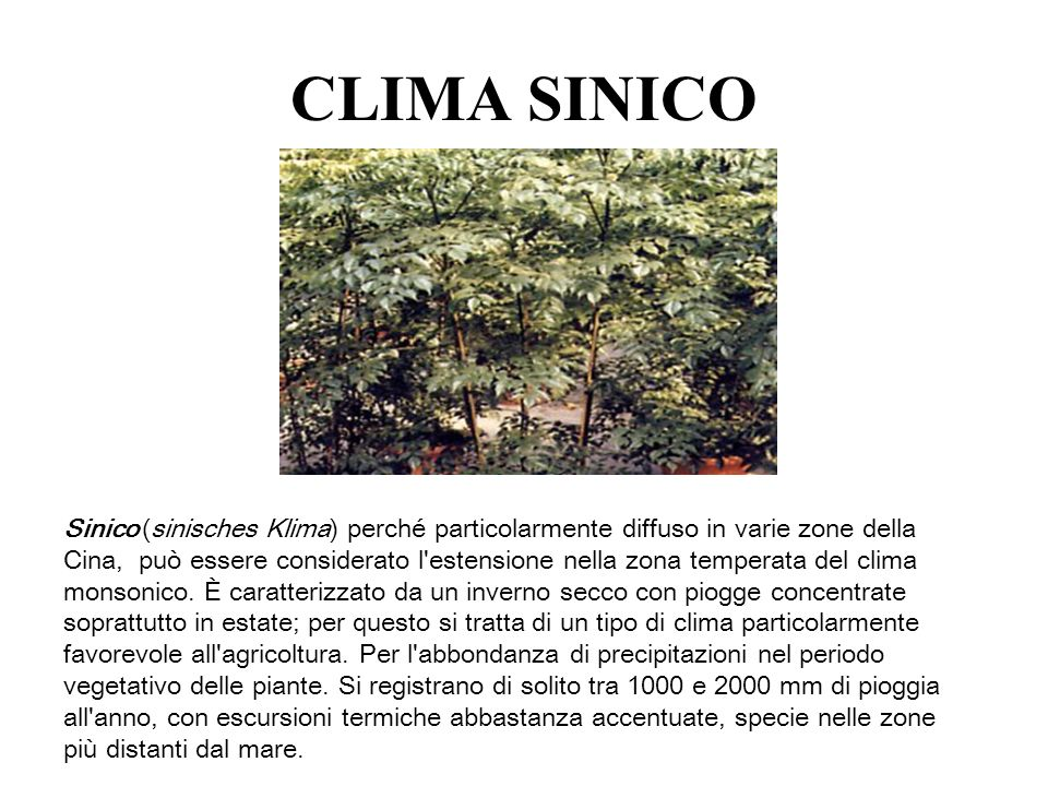 CLIMA SINICO
