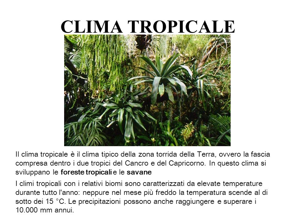 CLIMA TROPICALE
