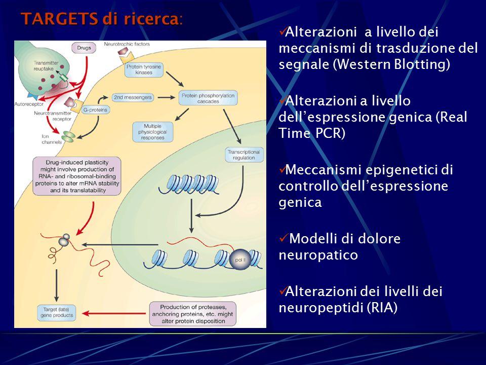 TARGETS di ricerca: Alterazioni a livello dei meccanismi di trasduzione del segnale (Western Blotting)
