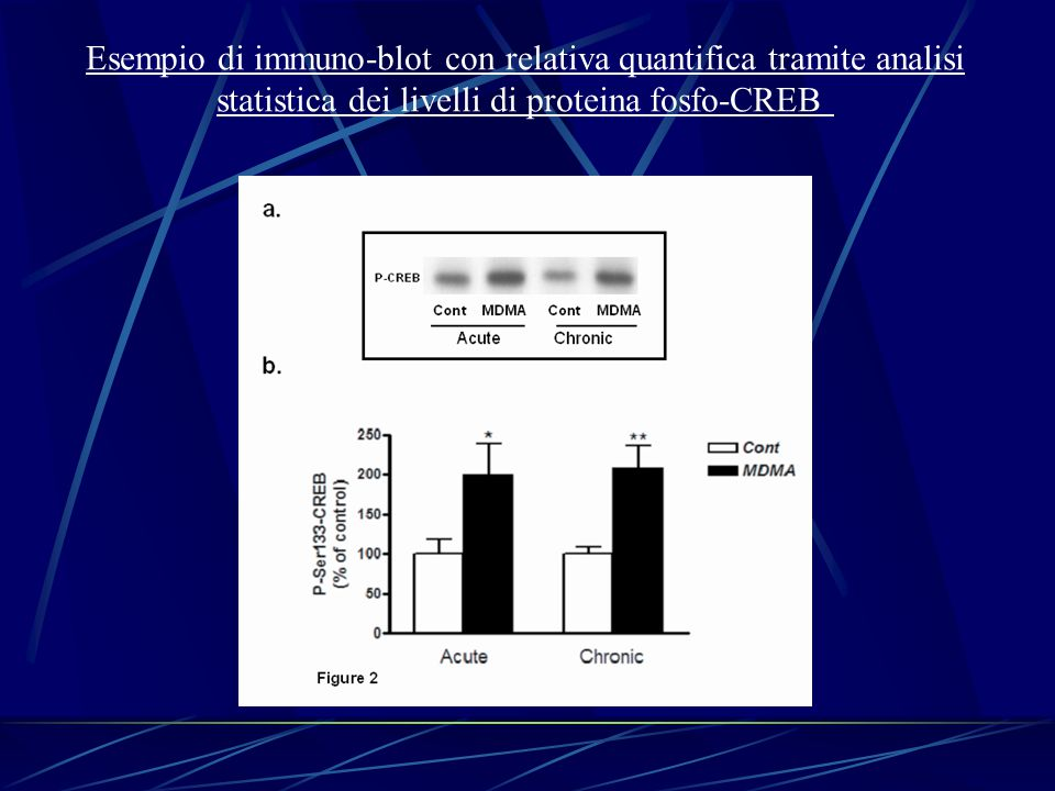 Esempio di immuno-blot con relativa quantifica tramite analisi
