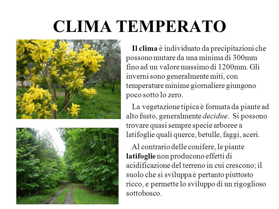 CLIMA TEMPERATO