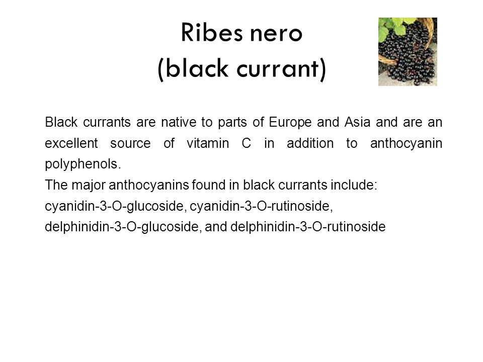 Ribes nero (black currant)