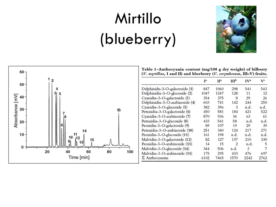 Mirtillo (blueberry) 15