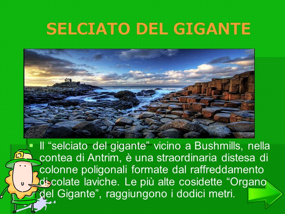 SELCIATO DEL GIGANTE
