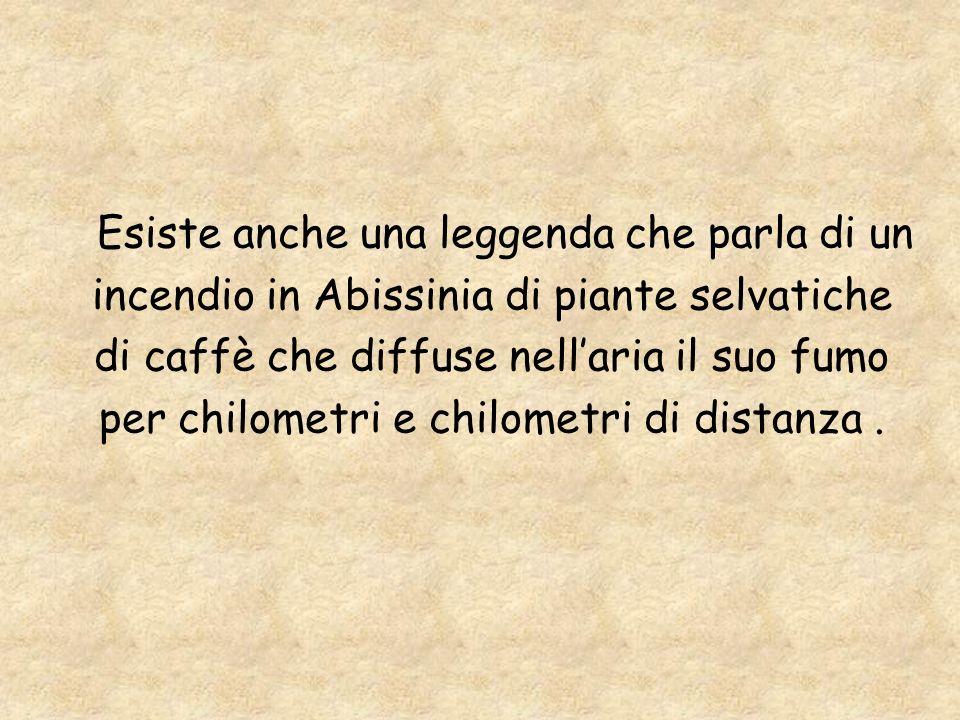 Esiste anche una leggenda che parla di un incendio in Abissinia di piante selvatiche di caffè che diffuse nell'aria il suo fumo per chilometri e chilometri di distanza .