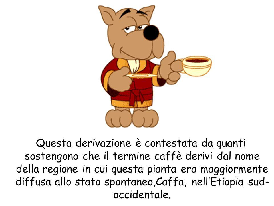 Questa derivazione è contestata da quanti sostengono che il termine caffè derivi dal nome della regione in cui questa pianta era maggiormente diffusa allo stato spontaneo,Caffa, nell'Etiopia sud-occidentale.
