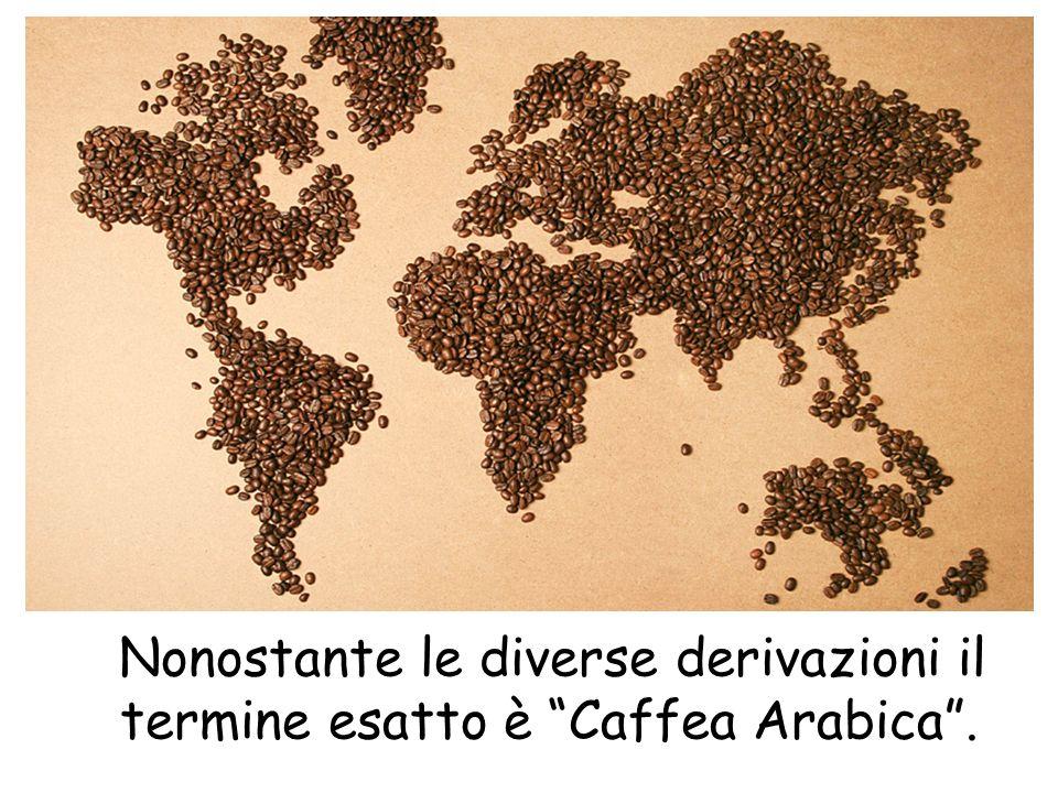 Nonostante le diverse derivazioni il termine esatto è Caffea Arabica .