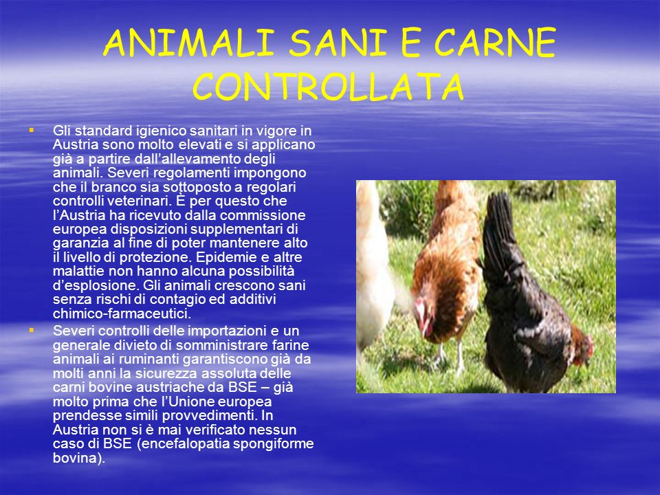 ANIMALI SANI E CARNE CONTROLLATA