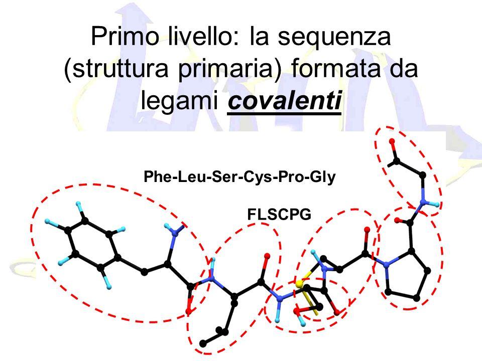 Primo livello: la sequenza (struttura primaria) formata da legami covalenti