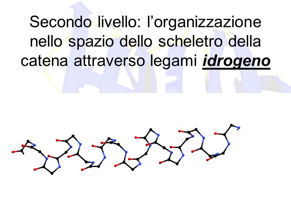 Secondo livello: l'organizzazione nello spazio dello scheletro della catena attraverso legami idrogeno