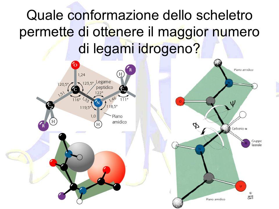 Quale conformazione dello scheletro permette di ottenere il maggior numero di legami idrogeno