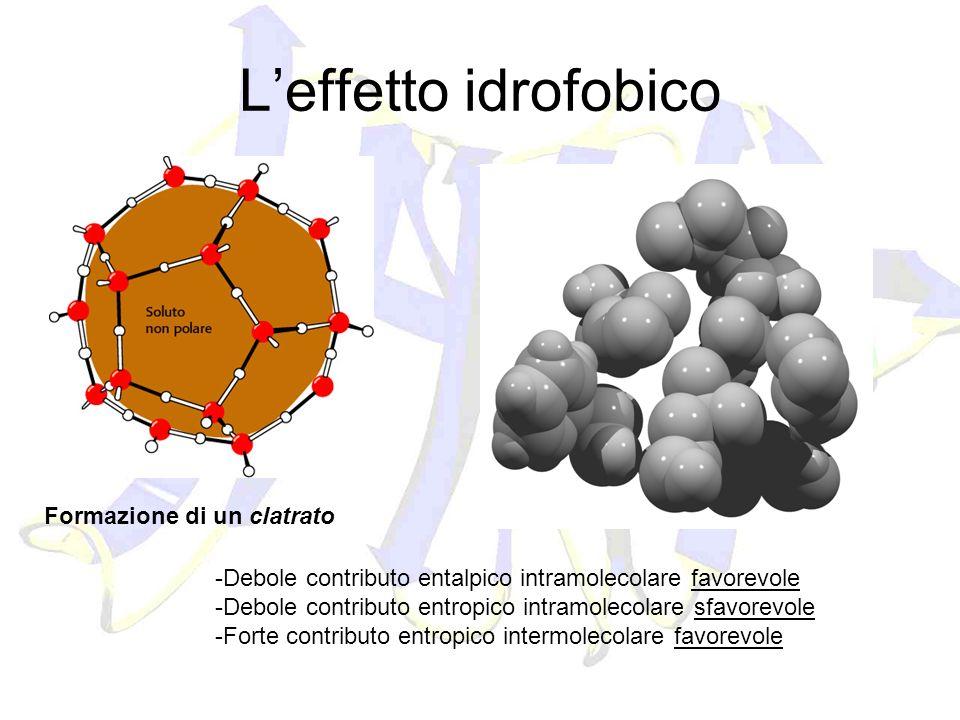 L'effetto idrofobico Formazione di un clatrato