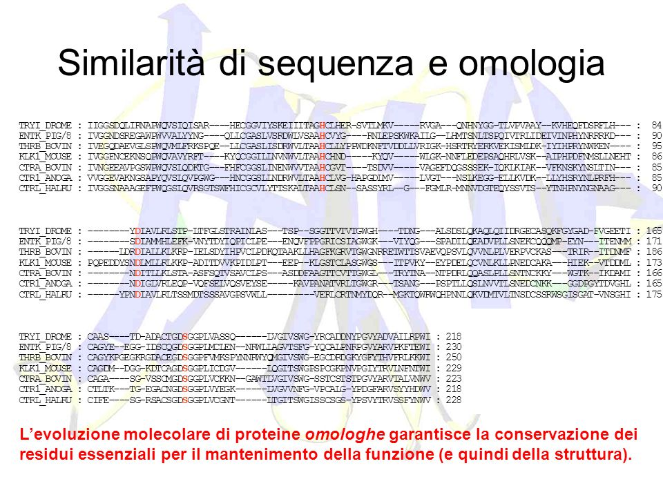 Similarità di sequenza e omologia