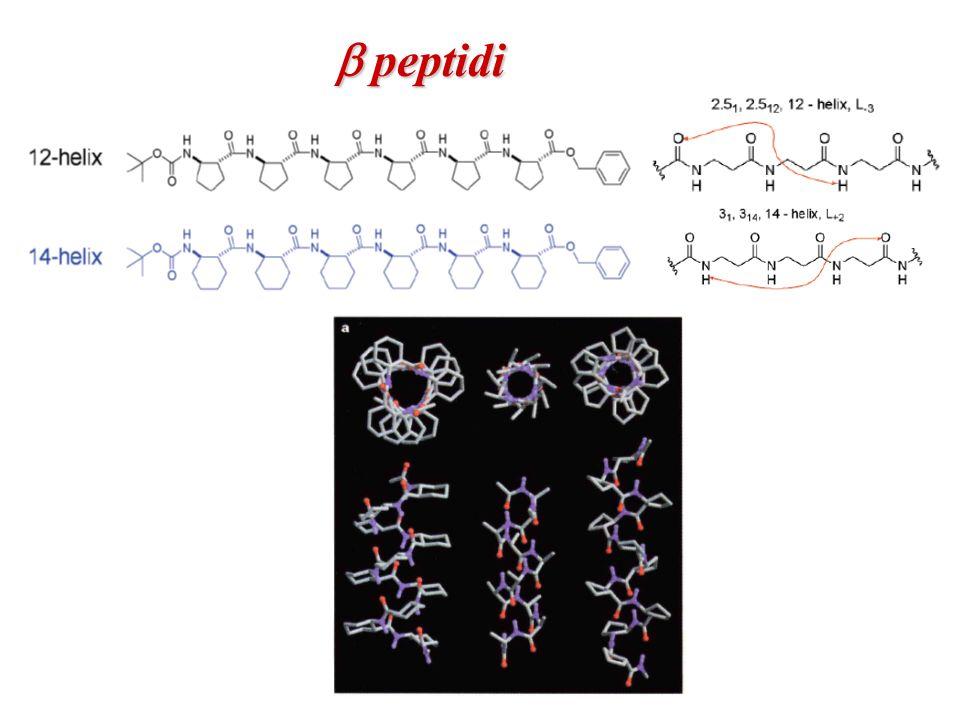 b peptidi