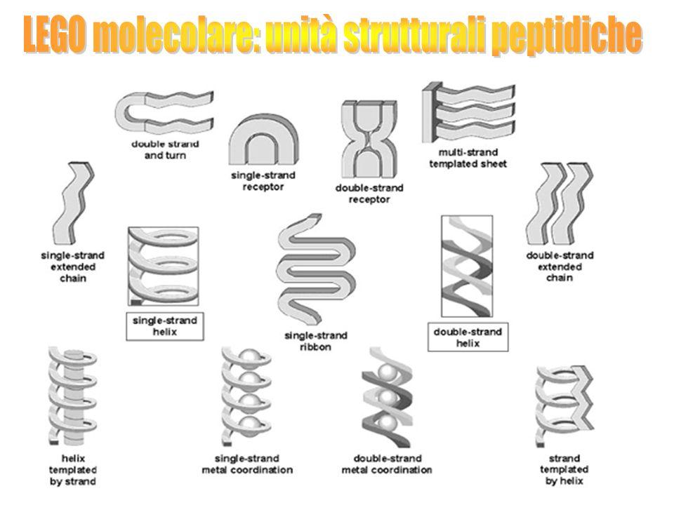 LEGO molecolare: unità strutturali peptidiche